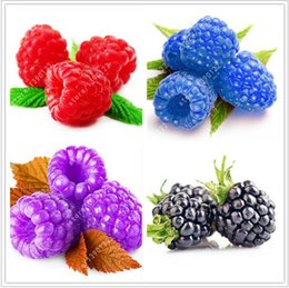 Wholesale Organic Flower Gardening - fast shipping rare mixed COLORS raspberry seeds organic fruit seeds green red blue purple black raspberry seeds for home garden plant