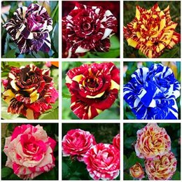 Wholesale Roses Gardens - Free Shipping Cheap Mixed Color Rose Flower Seeds *300 Seeds Per Package* Balcony Potted Flowers Garden Plants