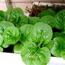 200 semi di spinaci nani Malabar grande foglia varietà giardino domestico fai da te alto rendimento Heirloom vegetale può crescere in vaso da erbe comuni fornitori