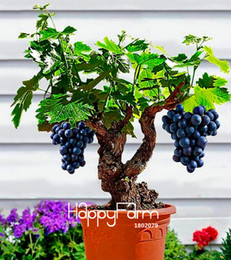 Wholesale big vine - Big Sale!Miniature Grape Vine Seeds, PATIO SYRAH, Vitis Vinifera, Houseplant, 50 Seeds, Fruit bonsai seeds,#1UM2LB