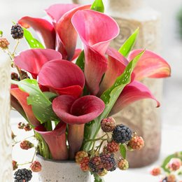 Wholesale Wholesale Lily Flowers Bags - 20 PCS  bag purplish red calla seed flower lily seeds Rare Plants Flowers Seed for Home gardening DIY easy grow best gift for wife Calla lil