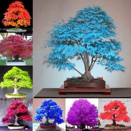 Fiori di albero di acero online-30 pezzi / sacchetto di bonsai americano semi di albero di acero grandi piante decorazione del giardino bonsai semi di fiori