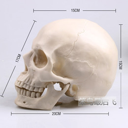 Wholesale Resin Model Ships - Wholesale-white 1: 1 human skull model life size resin skull model art teaching human skeleton model free shipping