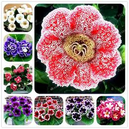 Wholesale Growing Perennials - 22 Colors Gloxinia Seeds Perennial Bonsai Balcony Flower - 100 Pcs Garden Decoration Bonsai Planting Fast Grow Flower Seeds