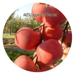 Wholesale Fruits Price - 500pcs a set AKESU Apple Fruit Tree Seed Hot Rare Seed Home Garden Reasonable Choice Reasonable Price Rare Seed For You