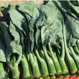 Wholesale growing garden vegetables - 200 Gai Lan Chinese kale Seeds Chinese broccoli NON-GMO Heirloom Vegetable Productive Easy-growing Popular DIY Home Garden Plant Crisp Tasty