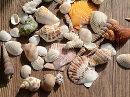 Wholesale Beach Shells Crafts - Approx 200g Beach Mixed SeaShells Mix Sea Shells Craft SeaShells Aquarium S