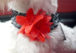 Wholesale Cat Lace Veil - New Arrival Pet Dog Cat Wedding Veil Neck Collar Lace Edge Floral Decor Dogs Necklace Multi Colors