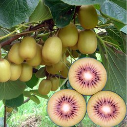 2019 semi di kiwi 100 PCS Red Kiwi Fruit Seeds Giardino e bonsai Giardino verde frutta e verdura Kiwi Seeds semi di kiwi economici