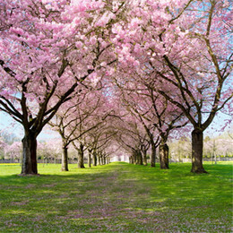 Wholesale Outdoor Photography Backdrops - Spring Flowers Scenic Wedding Photography Backdrops Pink Cherry Blossom Trees Green Grassland Kids Outdoor Background 10x10ft