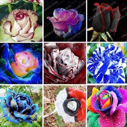 grandes sementes de flores Desconto 150 Partículas de uma Grande Coleção de Todos os Tipos de Raros Sementes de Rosas Flores Perenes 12 Variedades de Rosas