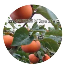Wholesale Persimmon Fruit - 50pcs a set Japanese SWEET PERSIMMON FRUIT Diospyros Kaki Tree Seed Rare Seed Hot Seed Great Quality Great Service Great Price