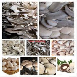 Wholesale Mushroom Seeds - 100   bag various mixed edible mushrooms, vegetable seeds