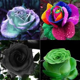 Wholesale Chinese Seeds - New 10 Kinds Rose Plants Flower Seeds 100 Seeds Per Package Wedding Flower Seeds Home Garden Office Decoration