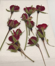 Wholesale Wholesale Dried Roses - Decorative flowers for home Rose Bud Red Color dried flower press flower free shipment 1 lot   120 pcs