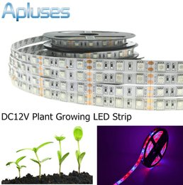 Wholesale Grow Lights Rgb - LED Plant Grow Light 5050 LED Strip Waterproof DC12V 60LED M Red Blue 3:1 4:1 5:1 For Greenhouse Hydroponic Plant Growing