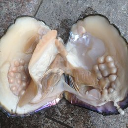Wholesale Wild Pearl - Wild Oyster Pearl Fresh Mussel Individually Vacuum Packed Big Oyster With Pearls Cultured in Fresh Oyster Pearl Mussel send to Canada