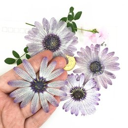 Wholesale Marigolds Flowers - Diameter 5 Cm Dried Marigold Flowers , Dried Purple Floral Flower For PostCard Gift Wholesale Free shipment 60 Pcs
