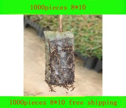 Wholesale Chinese Style Flower Pot - arden Pots Planters Flower Pots Planters Pocketgarden 1000pcs degradable environmental grow s protection bag plant seedlings seedling bag...