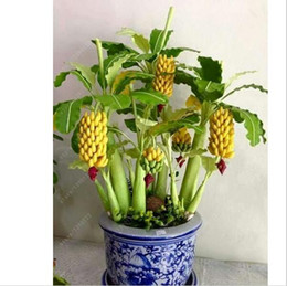 Wholesale Gardening Food - fast shipping rare Potted banana seeds bonsai Organic fruit seeds Healthy and nutritious food fruits dwarf banana plant for home garden