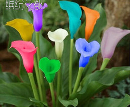 Wholesale Cheap Calla Lilies - Calla lily seeds, free shipping cheap calla lily seeds, calla lily potted seed, flower seeds - 100 pcs bag