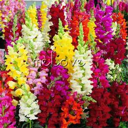 2019 piante di ortaggi comuni Colore misto Snapdragon Antirrhinum Flower 1000 Pz Semi Facile da coltivare Semi-resistente fiore per giardino di casa diy paesaggio confine contenitore