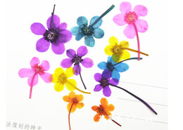 Wholesale Dried Lily Flower - 7 Different Color Calla lily Dried Pressed Flowers Art Specimens Plants For DIY Cell Phone Case 120 Pcs Wholesales