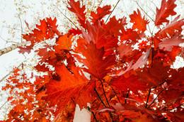 5D fai da te paesaggio foglie di acero rosso pieno di pittura diamante kit punto croce sopra foratura decorazione della casa da