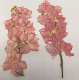 Wholesale 2017 Nestest Pink Larkspur With Stem Press Flower Several per branch For Candle Painting Decoration per