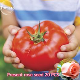 2019 piante da giardino di erba 100 pezzi Super Rare Red Giant Competition Russian Heirloom Tyazeloves Semi di pomodoro semi di ortaggi per piante da giardino NO-OGM piante da giardino di erba economici