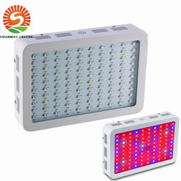 Wholesale Hot Grow - 600W 800W 1000W Hot Sale Double Chips LED Grow Light Full Spectrum For Veg Bloom Hydroponic Planting EU AU US UK Plug