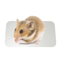 "Wholesale Hamsters Free Shipping - 19.7""L*14""W*0.78""H Pet Ice Mats Hamster Cooling Pad Small Animal Summer Beds Ice Pad Free Shipping"