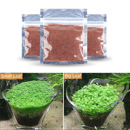 Wholesale Grass Seed Planting - Aquarium Glossostigma Hemianthus Callitrichoides Seeds Water Grass Mini Leaf Live Plant Fish Tank Decoration Landscape Ornament