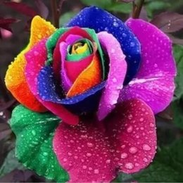 Wholesale Seed Wholesalers - Free Shipping Cheap Rinbow Rose Flower Seeds *100 Seeds Per Package* Balcony Potted Flowers Garden Plants