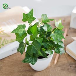 2019 semi d'edera Semi in vaso per interni Semi di edera Semi molto belli di fiori Pianta bonsai per giardino domestico 20 Particles / lotto T426 semi d'edera economici