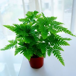 Wholesale indoor potted trees - 20pcs Fourier fern seed plants indoor plant Mini potted plants on the table office to purify the air radiation quality seeds