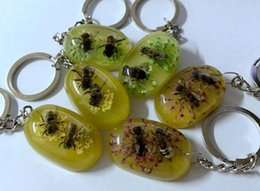Wholesale Insect Collection - FREE SHIPPING 12 pcs Yqtdmy Bee Collection Education Real Insect Specimen flower keychain