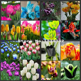 Wholesale Plants Seeds Bulbs - wholesale 10PC Mix Random high-grade plant tulip bulbs, variety bonsai plant garden