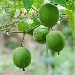 Wholesale Organic Fresh Fruits - BELLFARM Heirloom Luo Han Guo Siraitia Grosvenorii Fresh Seeds, 30 seeds, Chinese herbs fruits healthy garden plant easy to grow