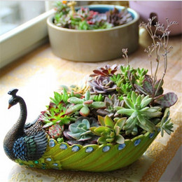 piante di piccole dimensioni Sconti