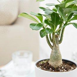 Rabatt Schöne Zimmerpflanzen 2019 Schöne Zimmerpflanzen Im Angebot