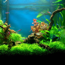 Wholesale Grass Seed Planting - Hot selling 300 pcs bag aquarium grass seeds (Aquatic plants) water aquatic plant seeds family easy plant seeds Easy to grow