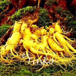 Wholesale Ginseng Planting - 30pcs Changbai Mountain Ginseng Seeds Ginseng Seeds Bonsai Plant DIY Rare Plant Home Garden Free Shipping