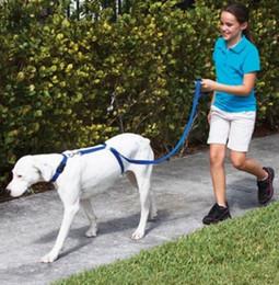 ha condotto il petto del collare del cane Sconti Imbracatura per cani Pet Guinzaglio Immediato Allenatore Corda Camminare Training dog harness leash Nylon Pet Rope Walking Training Cintura di sicurezza al guinzaglio KKA1828