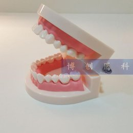 Wholesale Caring For Teeth - Wholesale- 9.5*7.5*5CM Oral health care dental model for early childhood tooth model natural big mouth