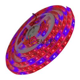 12w ha portato a crescere la lampadina Sconti Le luci blu-rosso dello spettro completo LED della pianta coltivano le strisce chiare 12V 60LEDs / M SMD5050 Le luci crescenti impermeabili del LED per l'impianto idroponico della serra