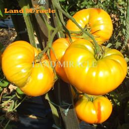 Semi di castagno organico online-Seme di pomodori gialli giganti, 100 semi, Heirloom Solanum Lycopersicum Seme di ortaggi biologici Frutta popolare
