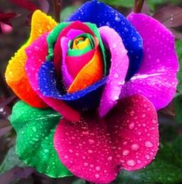 2019 semi di rosa all'ingrosso arcobaleno Semi di rosa arcobaleno semi di piante da esterno piantatore di piante bonsai semi di ortaggi molto profumati pianta bonsai da interno 100 particelle bonsai