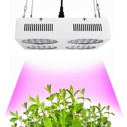 Wholesale Agriculture Led Lighting - CF Grow 252W LED Grow Light Full Spectrum Growing Lamp For Agriculture Hydroponic Greenhouse Tent Flowers Plants Growth Lighting