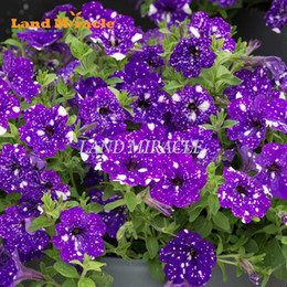 Wholesale Annual Garden Plants - Rare 'Night Sky' Purple Petunia Annual Flower Seed, 100 Seed Pack, Bonsai Ornamental Plants Garden Petunia